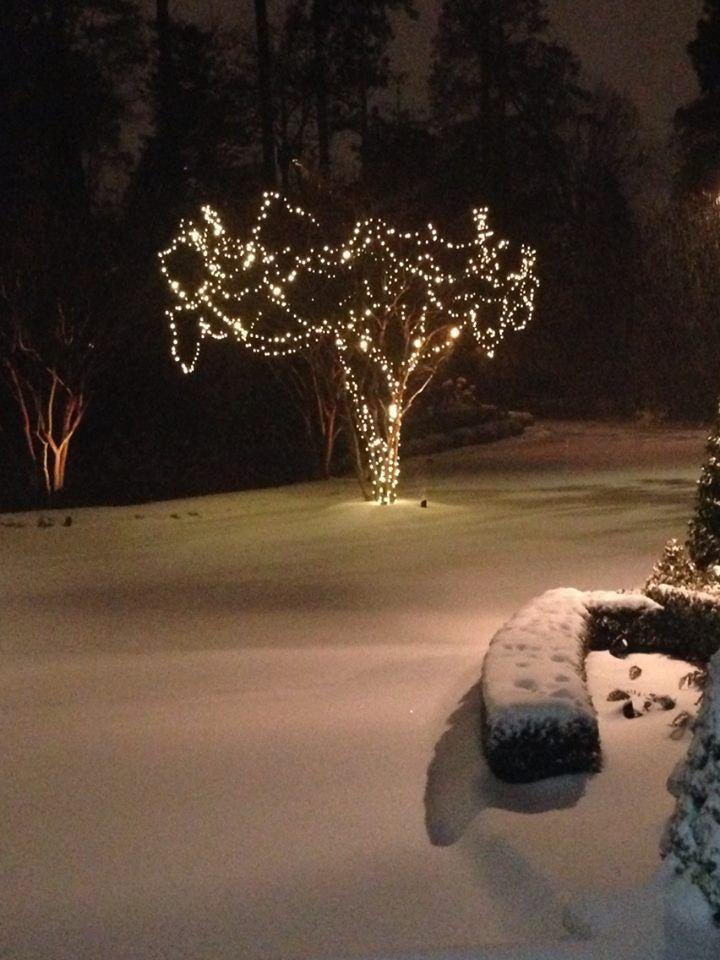LIGHTED TREE IN SNOW - PRETTY | Winter Scenes | Pinterest