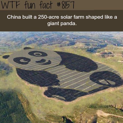 China built a solar farm shaped like a giant panda - WTF fun fact
