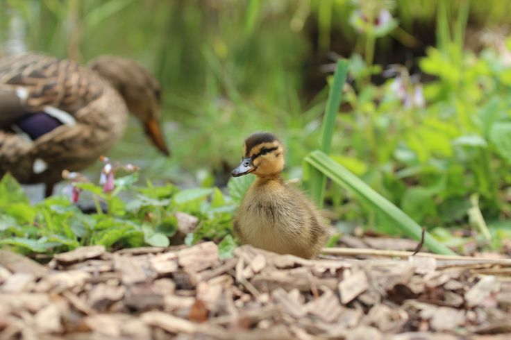Belvoir Wildlife With Wings: Matthew Wright's photo