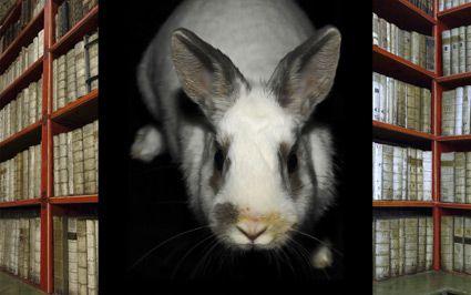 W. Rabbit - Corner II - 2011 © James McGrath  at Olsen Irwin Sydney Australia