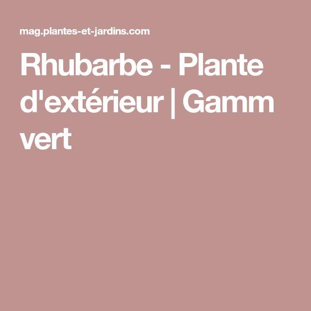 Rhubarbe - Plante d'extérieur   Gamm vert