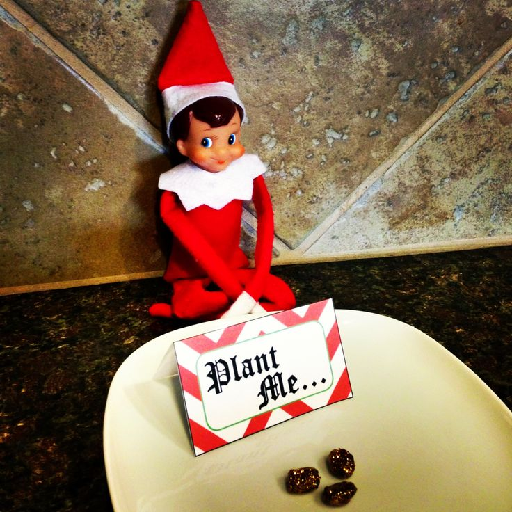 152 Best Christmas With The Elf On The Shelf Images On