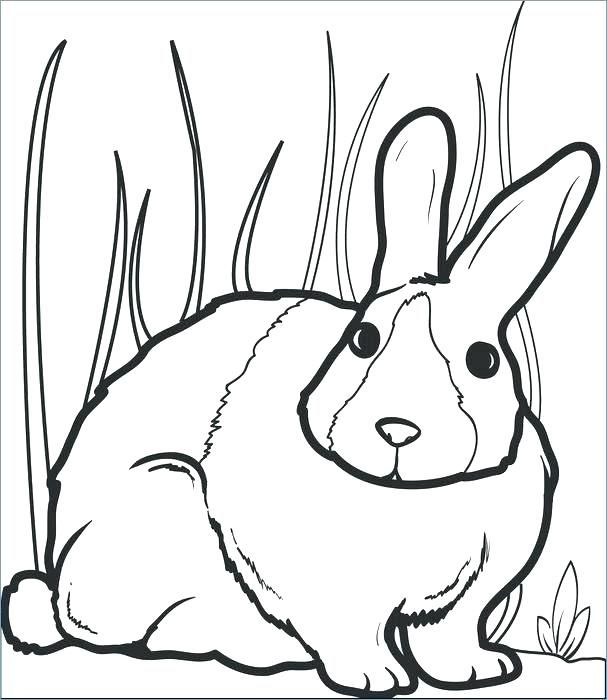 Preschool Cute Bunny Coloring Pages Free Printable Rabbit Page For Kids 2 Book Adults Pdf Bunny Coloring Pages Animal Coloring Pages Cartoon Coloring Pages