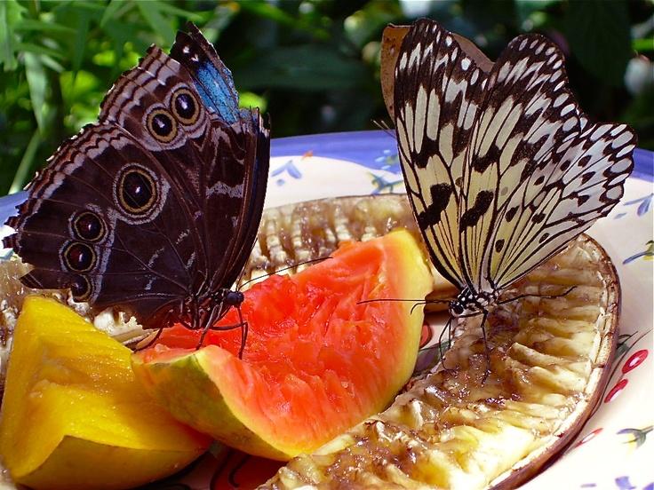 Butterfly Museum in Key West