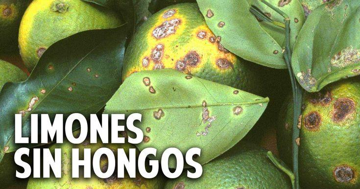 29 best images about cosas del jardin on pinterest for Como acabar con las hormigas del jardin