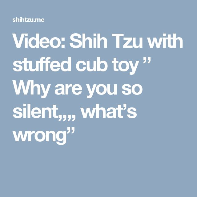 """Video: Shih Tzu with stuffed cub toy """" Why are you so silent,,,, what's wrong"""""""
