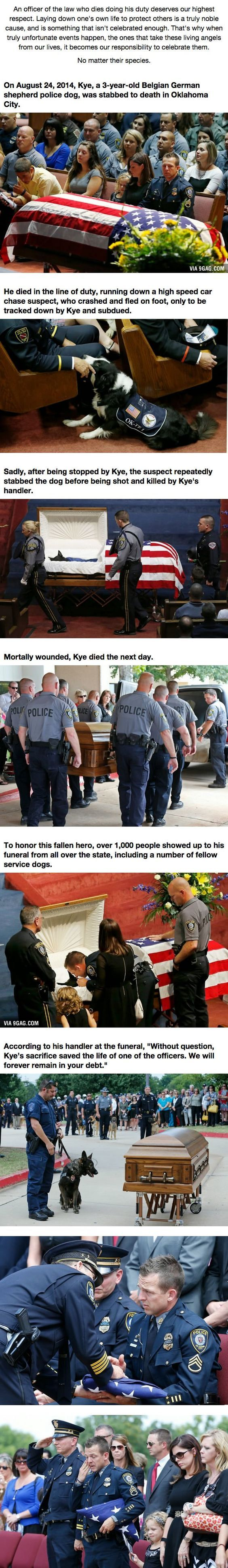 When This Hero Was Laid To Rest, He Was Truly Honored... And He's A Dog.