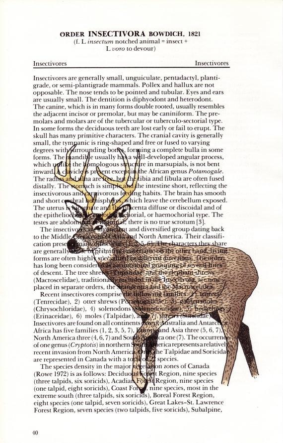 Deer print on page of the Handbook of Canadian mammals by CooperHaydenn, $10.00
