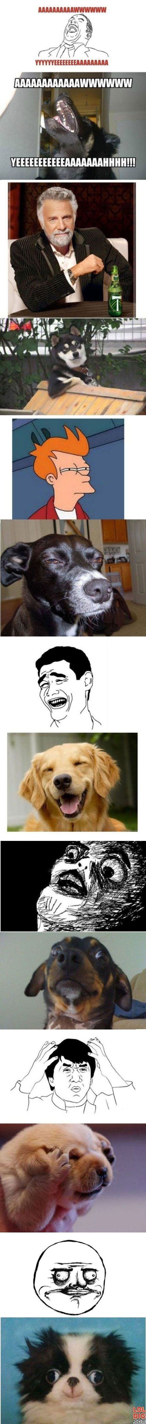 Funny Dogs that look like famous rage comic meme faces
