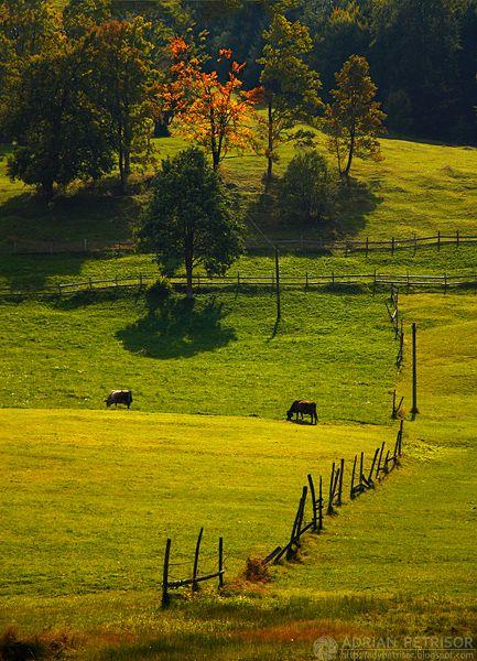 lostinthewoodswithyou:    Voi non capite, è una persecuzione. Stavolta stavo semplicemente cercando immagini di paesaggi rurali.