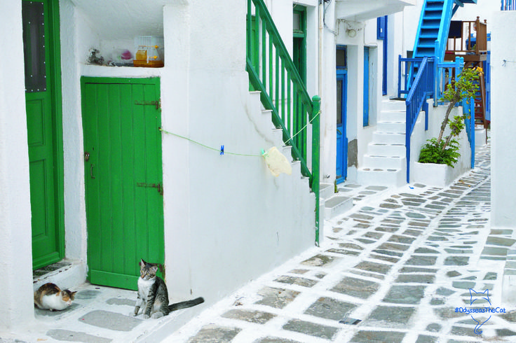 Hey, what's going on here? #OdysseasTheCat hanging out with his Mykonian best mate! #Mykonos