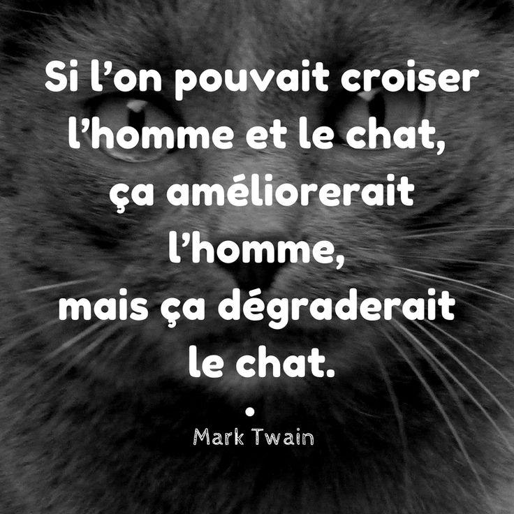 """Mark Twain : """"Si l'on pouvait croiser l'homme et le chat, ça améliorerait homme, mais ça dégraderait le chat."""" #citation #chat #humour"""