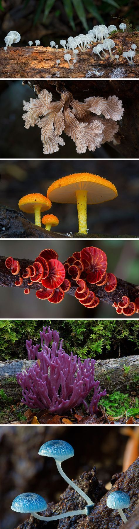 Radically Diverse Australian Fungi Photographed by Steve Axford  http://www.thisiscolossal.com/2015/05/radically-diverse-australian-fungi-photographed-by-steve-axford/