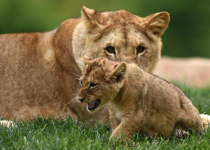 Фотографии животных « FotoRelax