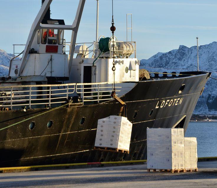 Kasser med skrei fra Vesterålen fraktes med MS Lofoten til fiskesultne sørpå. foto: Trond Gansmoe Johnsen.