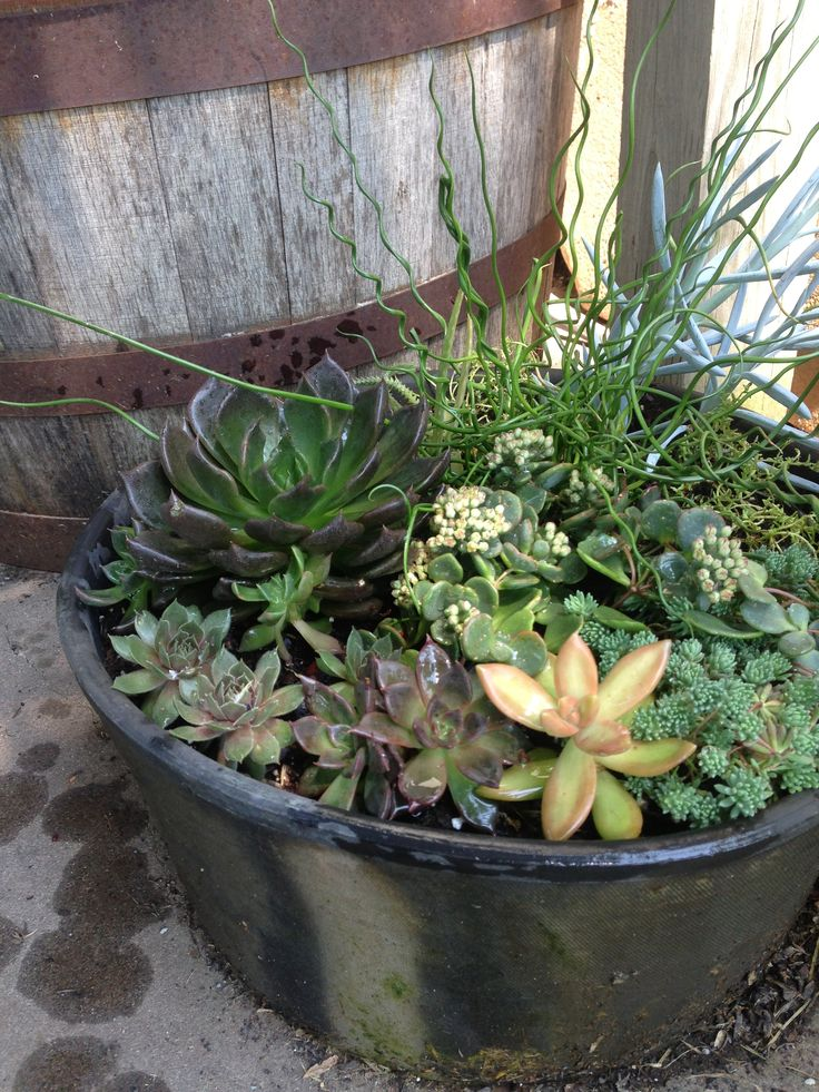 17 Best Images About Basket And Dish Garden On Pinterest