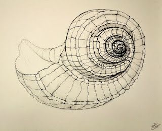 beautiful shell sketch  I really like the pattern and the line, but I would add a tone there to make it more realistic