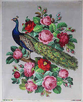 Antiguo Gran Pintado A Mano Berlín woolwork Bordado patrón-Pavo Real & Roses in Antigüedades, Linos y textiles (antes de 1930), Bordados | eBay