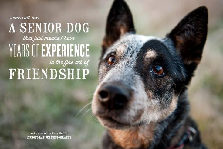 This is so appropriate for today. I saw a 13 year old dog who had been abandoned at the pound because her family was moving. Be prepared to love and care for your dog until it's very last day or don't bother getting one. They deserve that much. Three cheers for senior dogs!