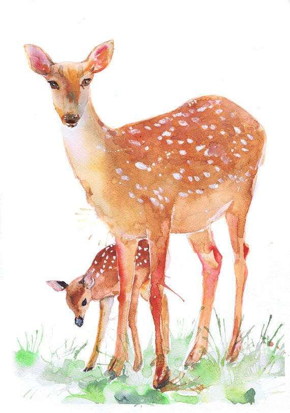 Fawn Print Deer Art Forest Animals Watercolor Painting