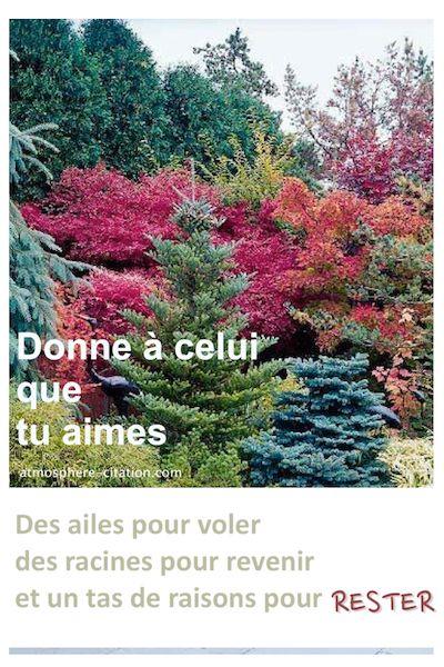 Donne à celui que tu aimes  Trouvez encore plus de citations et de dictons sur: http://www.atmosphere-citation.com/amour/amenagement-paysager.html?
