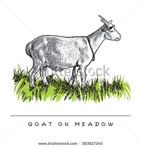 Goat On Meadow. Colored Vector Illustration.