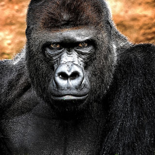 Mr. Kong ~ What a stare...
