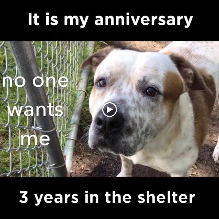 BARLEY HAS BEEN IN THE FOR SHELTER THREE YEARS Barley is available for adoption at: Brookhaven Animal Shelter 300 Horseblock Road Brookhaven, NY 11... - Tina Behla - Google+