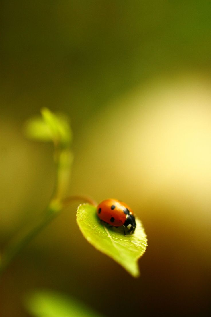 Ladybug by Alexandra Rampolla