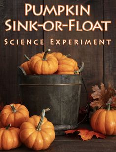 This post is written by guest blogger, Mary Kate Warner of ChristianityCove.com Science Experiment: Pumpkin Sink-or-Float Children are always amazed over what will sink and what will float. In this…