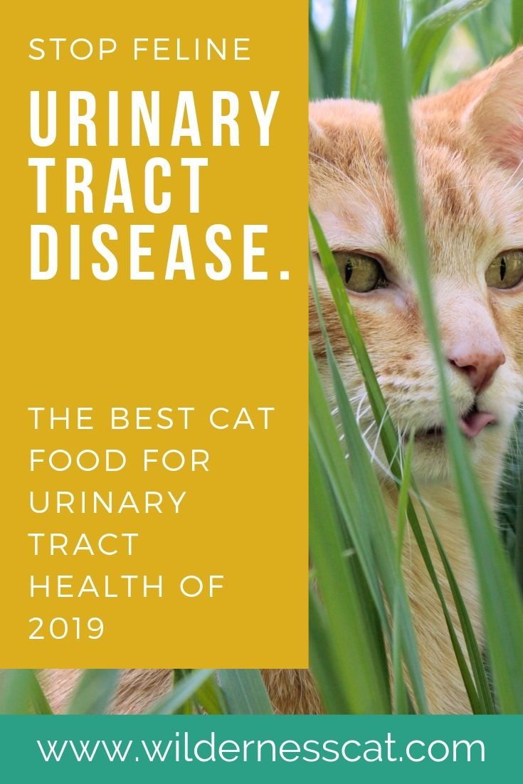 What Is The Best Urinary Cat Food Best Cat Food For Urinary