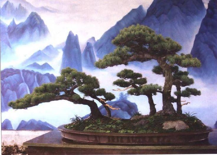 Best 25 bonsai forest ideas on pinterest bonsai tree for Unusual bonsai creations