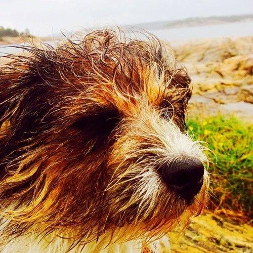 #atsjoo in the wet wind #hvaler #dog #hund