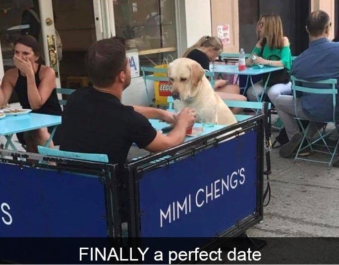 Who needs a girlfriend when you have a gorgeous pup to take out on dates #dogs #pets #dog #Adopt #love #cute #animals #puppy