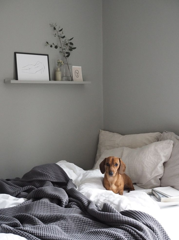 Sausage Dog In Bed Grey Scandi Inspired Bedroom With Ikea Mosslanda Shelf Getting The Guest Be Grey Bedroom With Pop Of Color Bedroom Interior Simple Bedroom