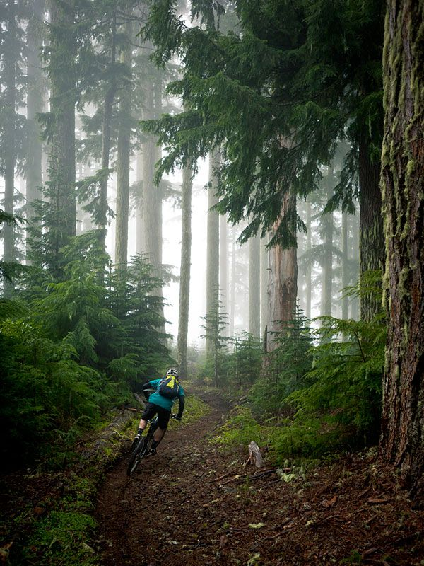 Relaxingly (is that a word) fun looking MTB trail.