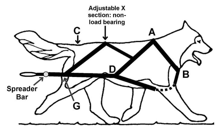 Weight pull harness diagram | Dog harness, Sled dog harness