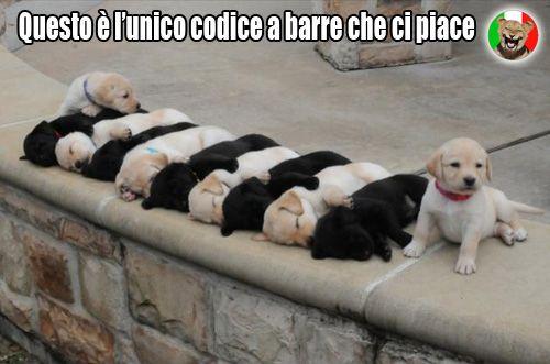 Codice a barre canino