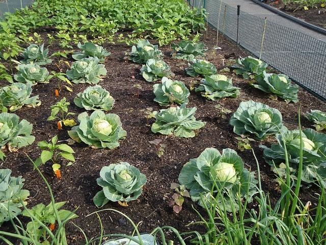 32 Best Compost 101 Soil Fertility Images On Pinterest 640 x 480