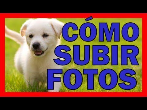 COMO SUBIR UNA IMAGEN a GOOGLE IMAGENES FACIL Subir Fotos a Servidor De ...