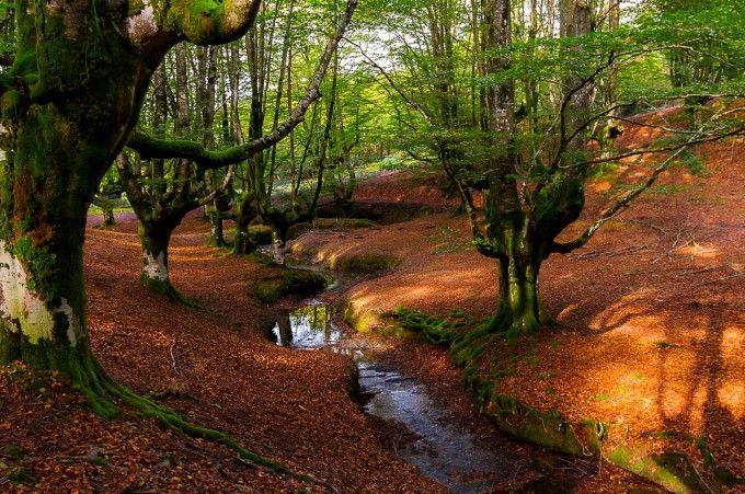El Hayedo de Otzarreta, Parque Natural de Gorbea (Vizcaya)