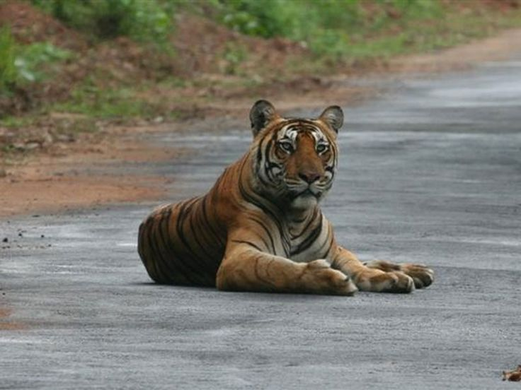 Talakaveri Wildlife Sanctuary - in Karnataka, India