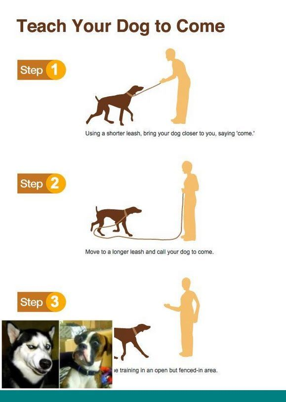 Caesar Milan Dog Training And Teach Attention To Dogs Dogtraining
