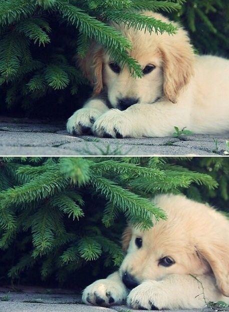 aww, so cute! #puppy
