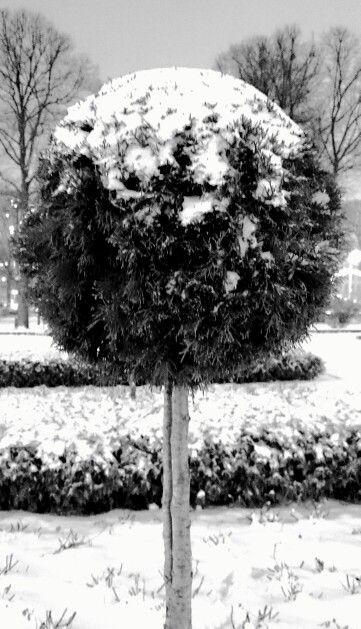 Зимний шар