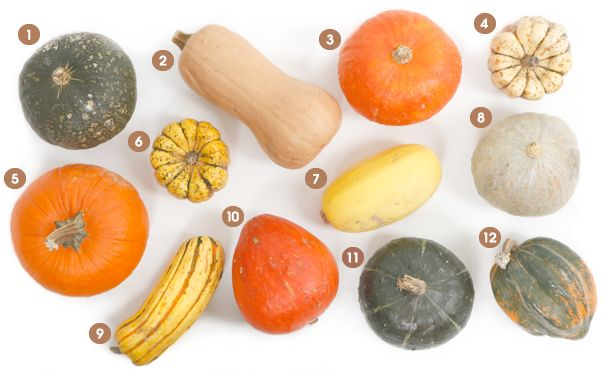 A Visual Guide to Winter Squash Get to know 12 delicious varieties, from pumpkin and butternut to acorn and spaghetti—recipes included from Epicurious.com