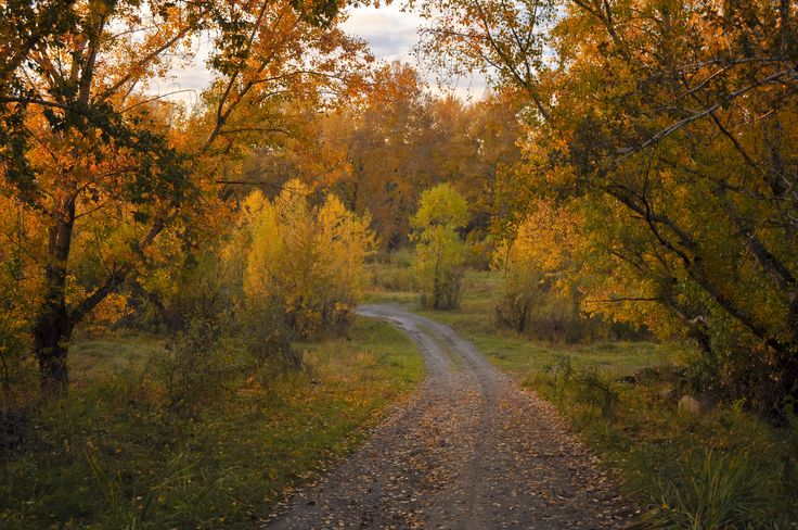 Χαρακτηρισμός έκτασης ως δάσος ή δασική