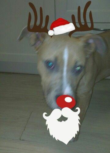 Geken kerst hond℉