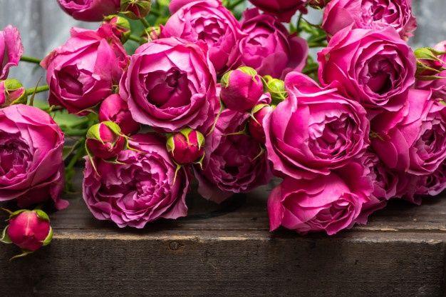 Piekna Roza Krzew Roz Slub Kwiaty Zblizenie Flowers Rose Plants