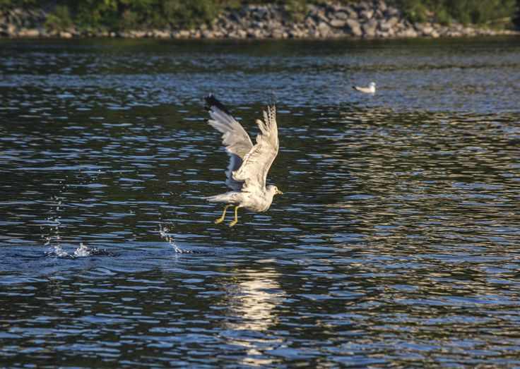 Freedom to fly... - Ottawa, Canada, Ontario,North America